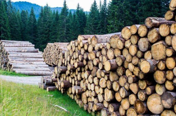 Аукціони з продажу деревини