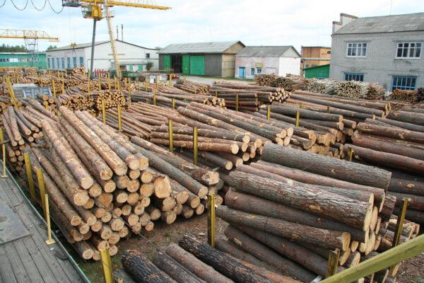Продажа необработанной древесины — как принять участие в открытом аукционе